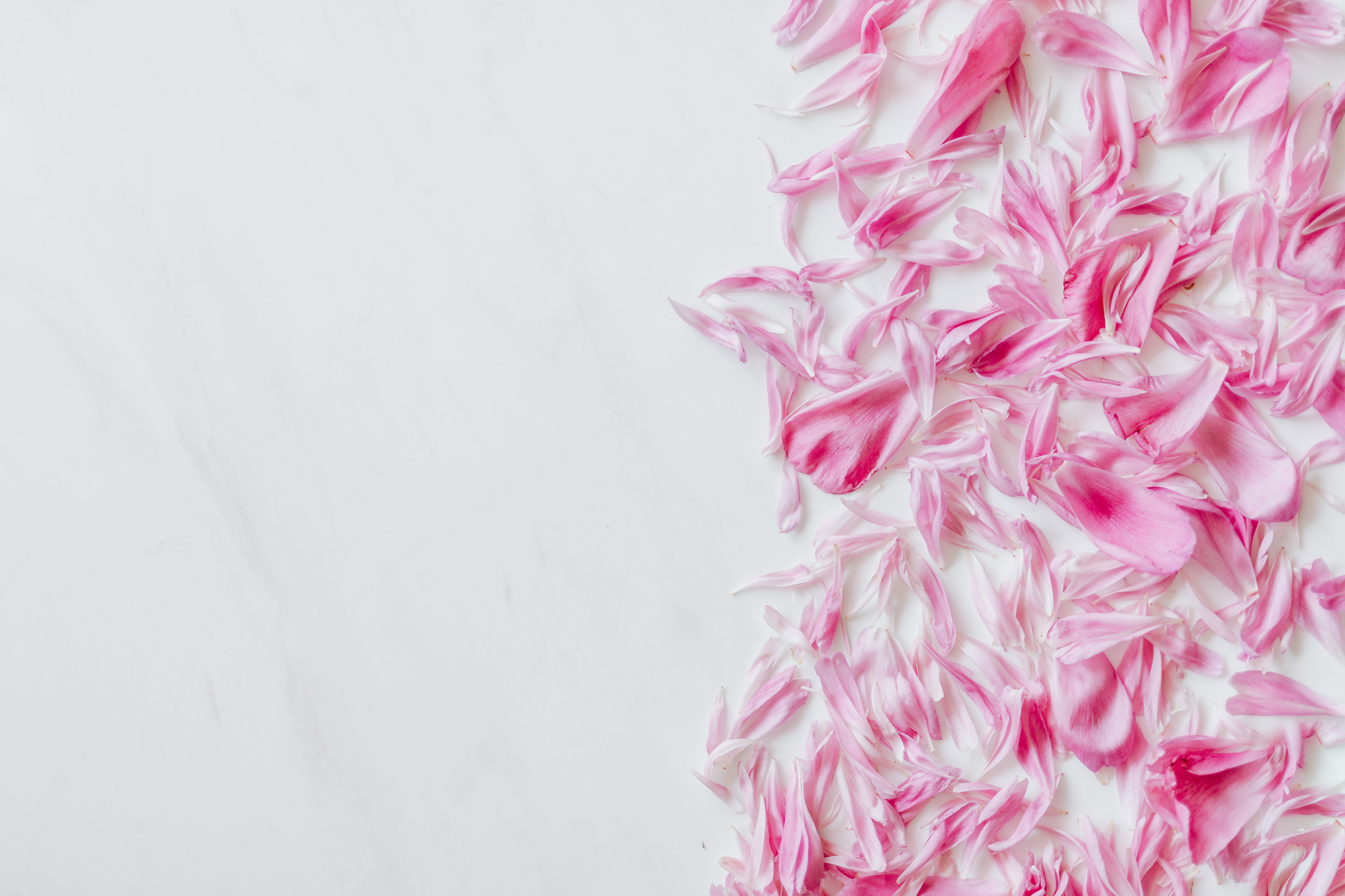 kaboompics_Peonies on white marble background 2