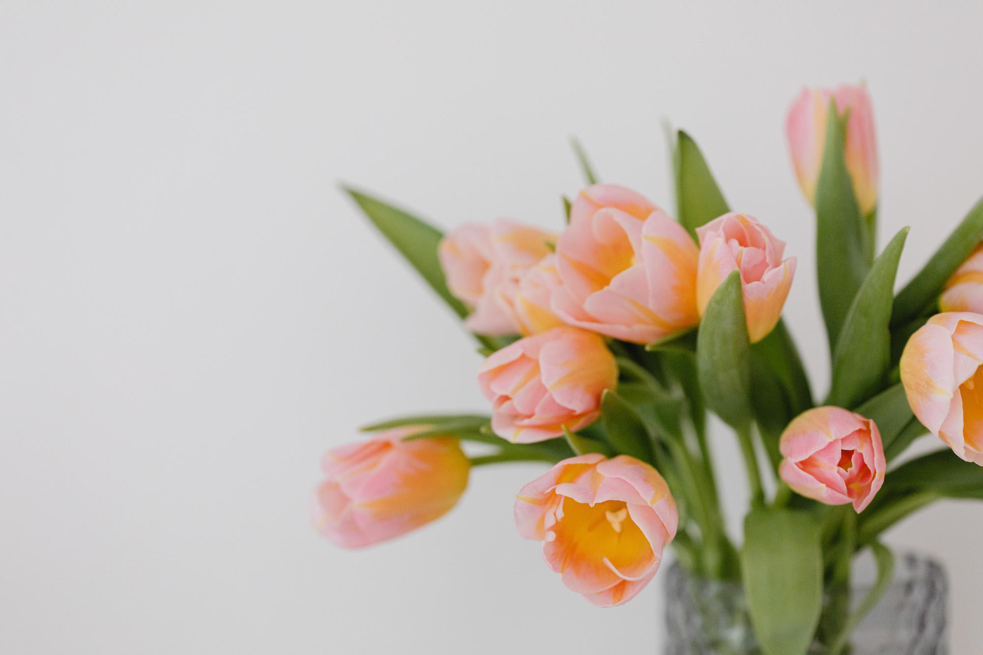 kaboompics_Pink and yellow tulips-4r