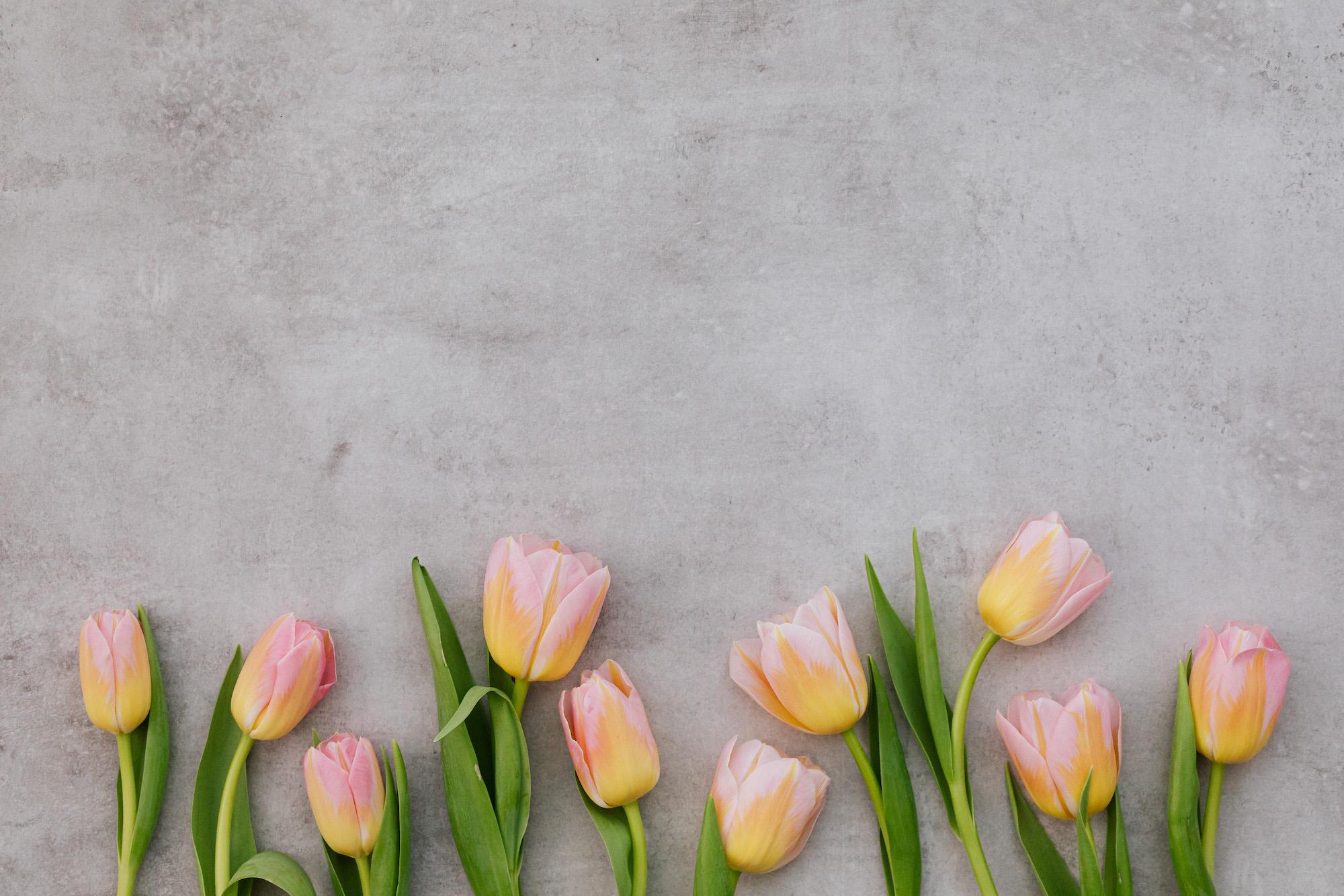 kaboompics_Pink and yellow tulips-5r